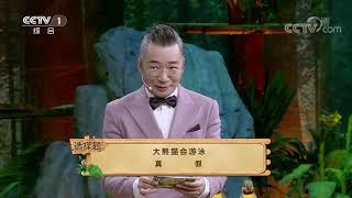 [正大综艺·动物来啦]大熊猫会游泳?|CCTV综艺 - YouTube
