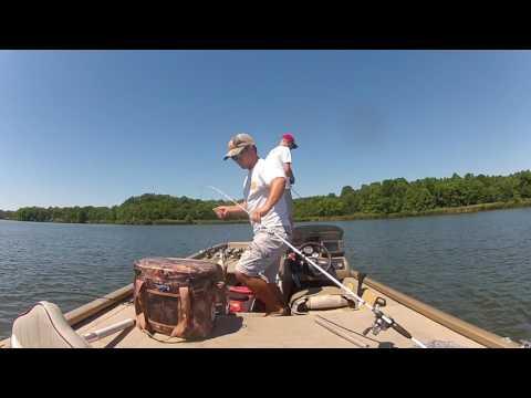 Summer Bass : Short Clip | Newton Lake Ft. Will N.