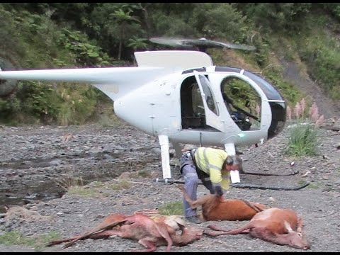 Helicopter Hunting  In  New Zealand.