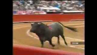 Pajarito (birdie): the flying bull