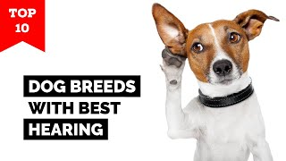 Top 10 Dogs With Best Hearing