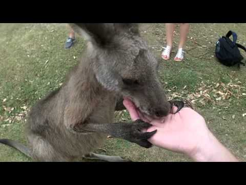 Episode 5 : Lone Pine Sanctuary NON VISIBLE EN FRANCE / Julien's australian life