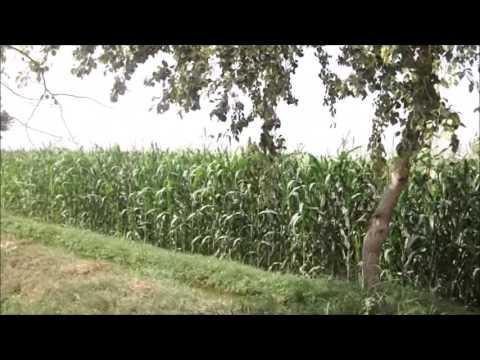 Rural Fields Of Punjab