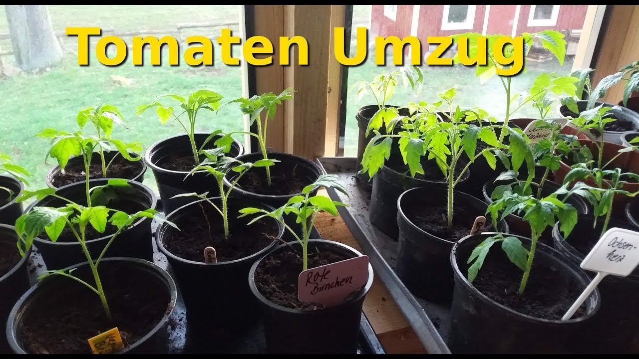 gew chshaus update tomaten und paprika ziehen ein youtube