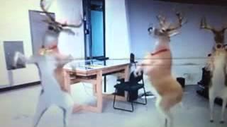 Dog dance សត្វឆ្កែដែលនាំឱ្យកាន់តែល្អប្រសើរxvid