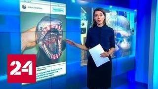 """""""Фантастические твари"""" моряка Федорцова шокировали Twitter"""