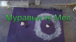 Боятся ли муравьи мела?
