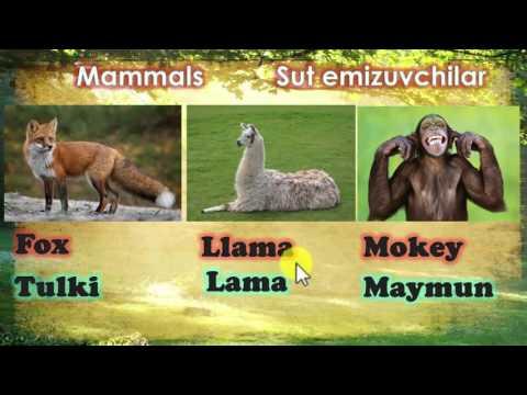Learning Uzbek language :Animals names