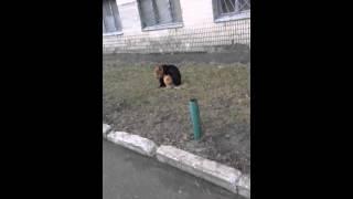 собака еб#т кота