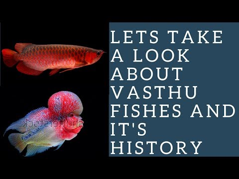 A Review About Vasthu Fishes(Tamil)