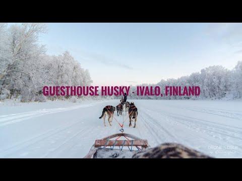 Guesthouse Husky, Ivalo, Finland - Husky Safari in -24°C (4K Tour)