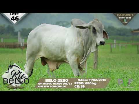LOTE 46   BELO 2850
