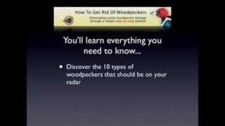 How To Get Rid Of Woodpeckers - Fast & Humane Woodpecker Control