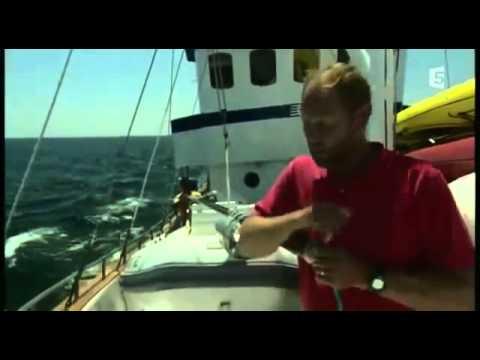 Cachalot Contre Calamar Geant documentaire complet en français YouTube YouTube