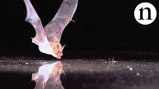 BAT SENSE - by Nature Video