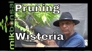 How to Prune Wisteria tree (and How to prune bonsai wisteria)
