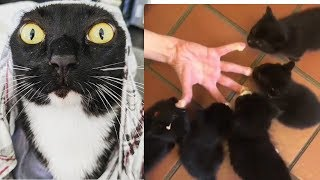 *WHAATT, THIS ISN'T FOR YOU TO WEAR IT? | FUNNY CATS VIDEO*