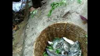 Karimeen fishing at Pearl spot fish farm season 2