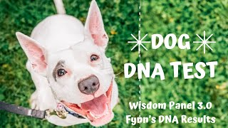 Wisdom Panel Dog DNA Test Review | Fynn's Results