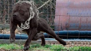 Most POWERFUL Dog Breeds In The World!