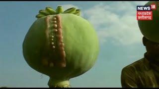 कैसे करें अफीम की खेती | अन्नदाता
