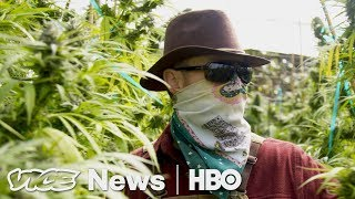 Prop 64 Legal Weed in California  VICE News Tonight on HBO (Full Segment)