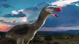 Terror Bird - Ancient Animal (audio issue)