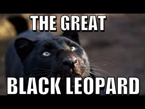 BLACK LEOPARD IN DARJEELING ZOO 2015