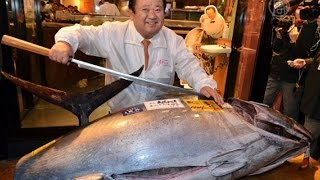 Первого тунца 2015 года продали за $37,5 тысяч (новости)