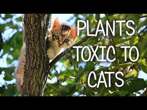 Plants Deadly To Cats! (Poisonous Plants Dangerous To Cats)