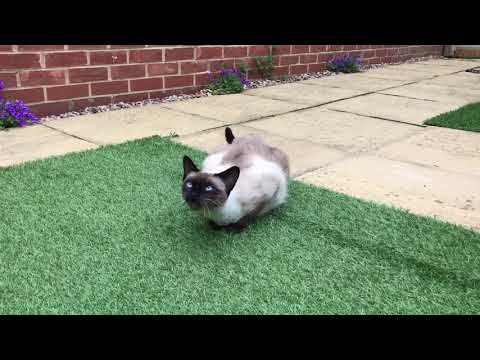 Kittens Meowing - CUTE & FUNNY - 2017
