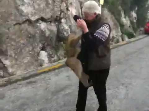 Gibraltar Monkey Attacks Woman - YouTube
