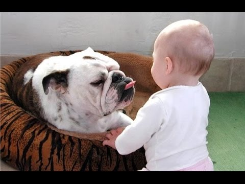 Funny Bulldog and Baby Video Compilation 2014