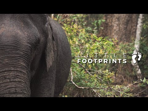 ELEPHANT VALLEY PROJECT - CAMBODIA (Little Footprints)