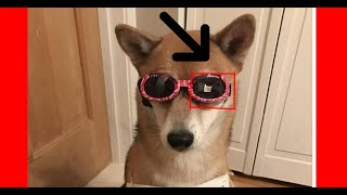 FUNNIEST ANIMALS 2019]😍*CUTE* FUNNY*😂 animals 2019 Try Not To say AWW and Laugh 2019 #2