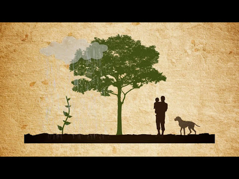 The Value of Forests
