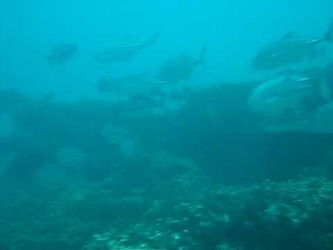 Group Jackfish (Mauritius)