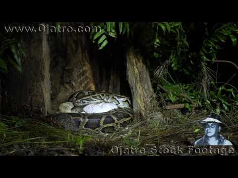 Python vs Turtle 03 Music