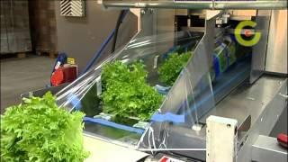 Технологический комплекс для выращивания салата