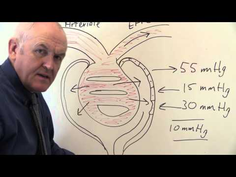 Renal System 11, Formation of Glomerular Filtrate