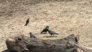 Парочка птиц в минском зоопарке.(, 2014-07-23T16:20:25.000Z)