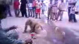 jeeve pakistan monky play
