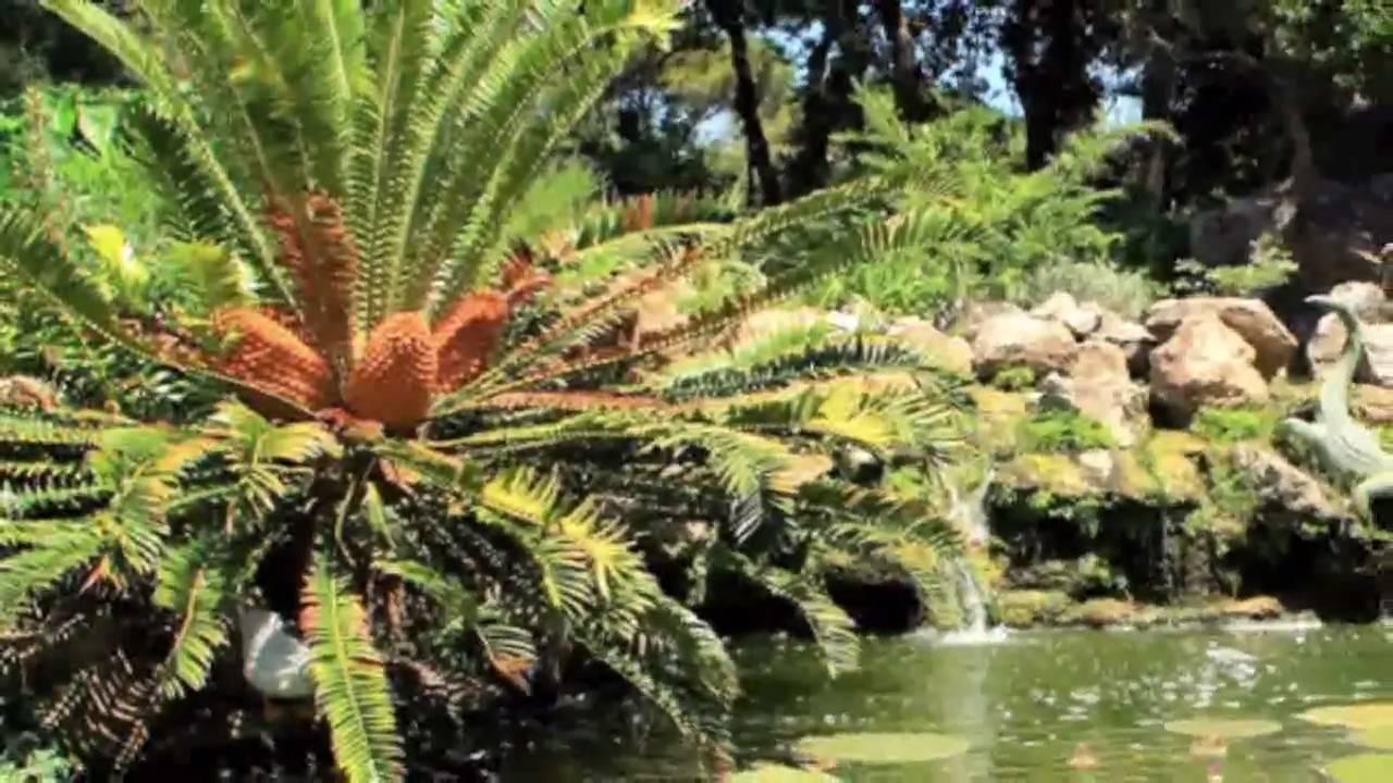 Giardini la mortella ad ischia youtube - Giardino la mortella ...