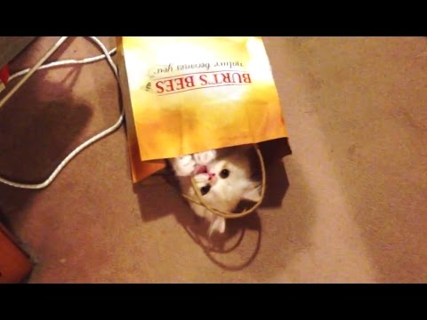 Kittens vs. Paper Bags Compilation