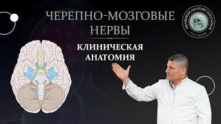 Клиническая анатомия черепно мозговых и спинномозговых нервов