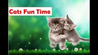 Funny Cats video - Cats funny moments