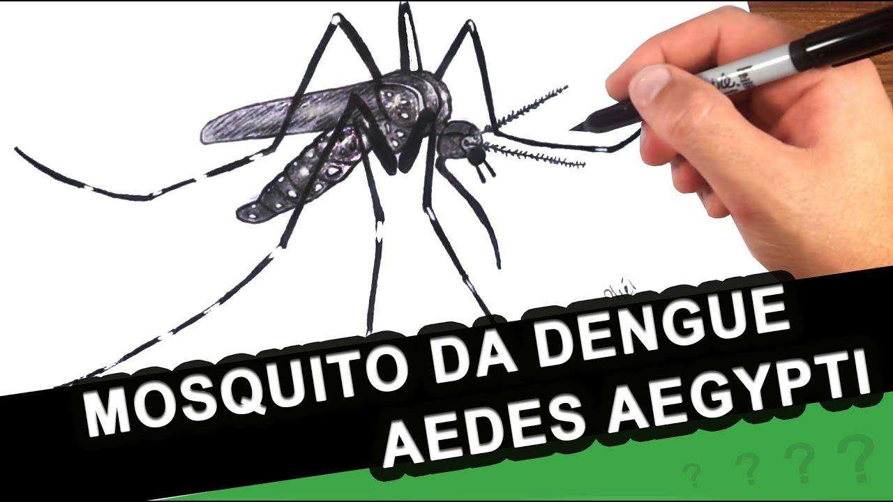 Mosquito Da Dengue Como Desenhar O Aedes Aegyti Como E O