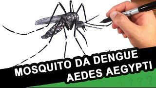 Mosquito da Dengue - Como Desenhar o Aedes Aegyti - Como é o Mosquito da Dengue - Chikungunya - #17