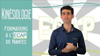 Kinésiologie Formations à l'ECAP de Nantes