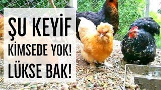 KÖY HAYATI : Tavukların Dut Keyfi | Şehirden Köye Göç | Köyde Yaşamak